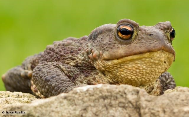 Toads mean Trouble 4